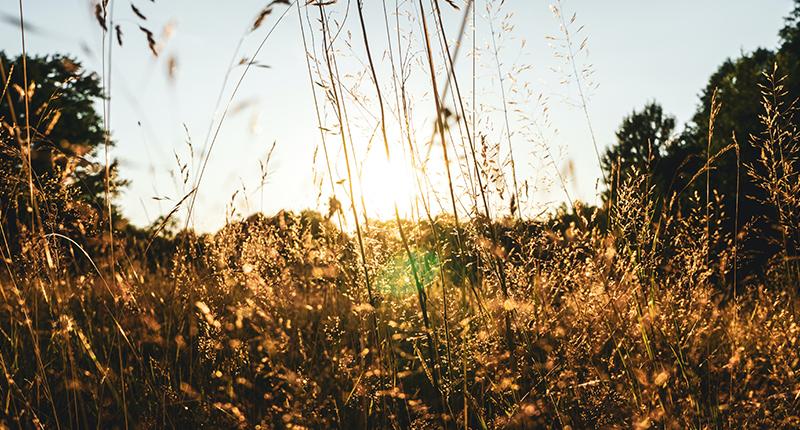 Foto von Gräsern – Allergien behandeln